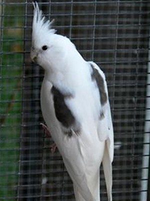 Omar`s Exotic Birds